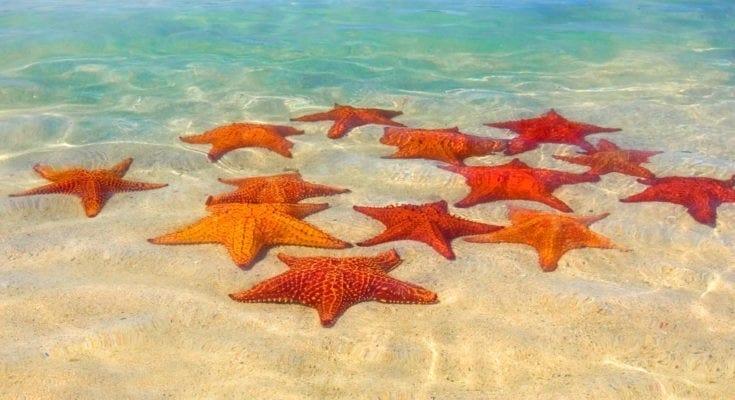 Starfish5 735x400